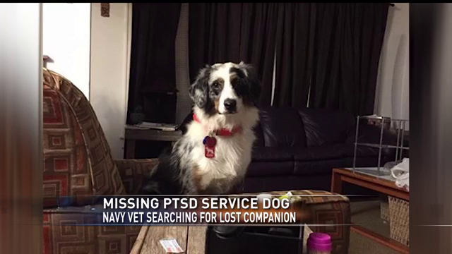 marshall man looking for missing ptsd service dog