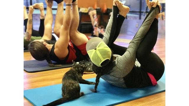 Kittens, gym goers reach purr-fect zen during 'Yoga with Kittens'